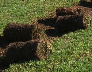 Rolls of Kikuyu Lawn